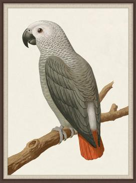 Gray Parrot II | Laura Ramsey Furniture & Interiors