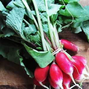 Buy Raphanus sativus, China Rose Winter Radish | Herb Seeds for Sale