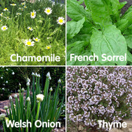 Perennial Seed Bundle - Special Offer