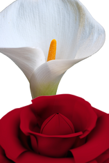 Floral Musk by Attar Mist