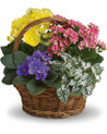 Mixed green and flowering plants arranged in a basket for delivery in Italy.