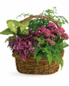 Mixed arrangement of plants, perfectly choice for a gift to him for delivery in Italy.