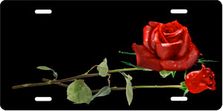 Red Roses on Black Offset Auto Plate sku T9254A