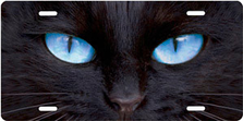 Black Cat with Blue Eyes Auto Plate sku T9171ZB