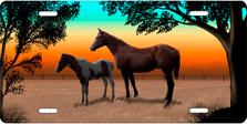 Full Color Horse and Foal Auto Platesku T9124D