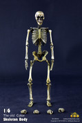 COO Model - Skeleton Body Movable Original Color
