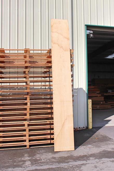Huge Swamp Ash Lumber Board