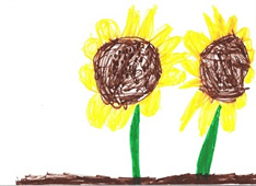 sunflowers-000.jpg