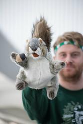 Puppet grey squirrel