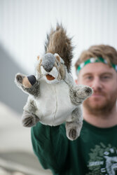 Puppet grey squirrel
