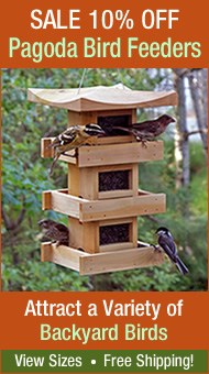 Holiday Sale! All Bird Feeders 10% Off
