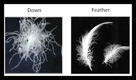 What Is The Difference Between Down And Feather