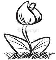Spring Tulip, Large