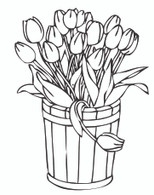 Bucket of Tulips