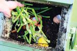 compost_steps_1_web.jpg