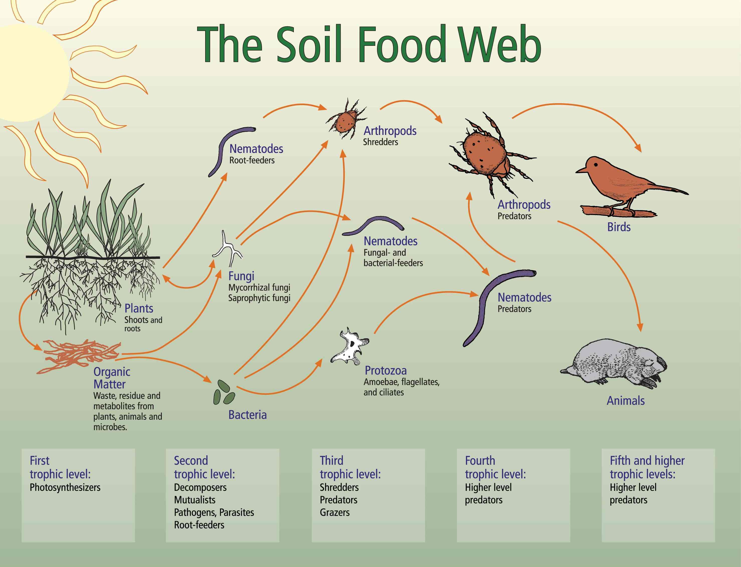 soil-food-web-map-copy.jpg