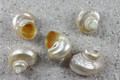 Gold Mouth Turbo set of 5