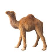 Pacha the LifeLike Camel