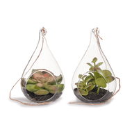 Green Succulent Glass Terrarium. Each sold separately