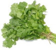 Cilantro (Bunch)