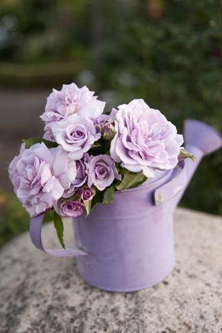 626-miniatures-roses-.jpg