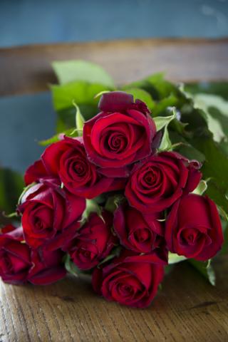 754-hybrid-tea-rose.jpg