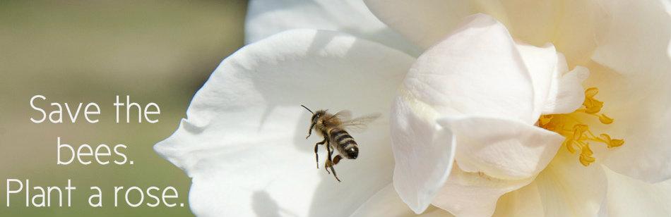bees-3.jpg