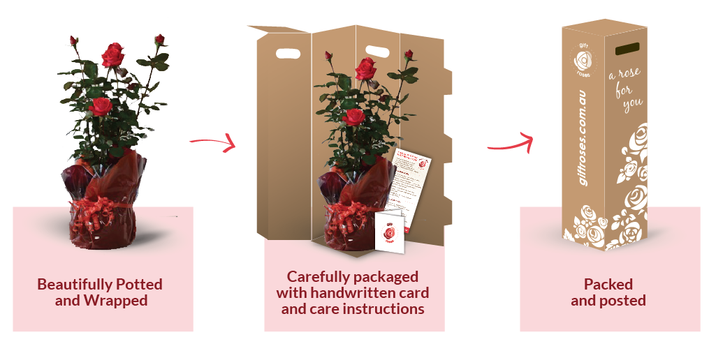 gift-rose-packing.png