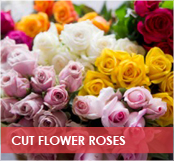 roses-categories-cut-flower-2-off.jpg
