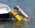 Doggy Boat Ladder