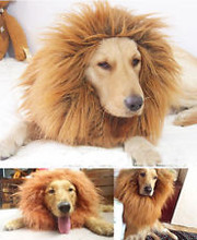 Lion Mane Costume for large dog