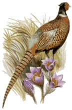 south dakota state bird flower