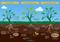 Soil Renew