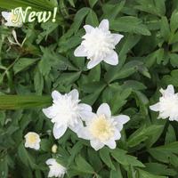 flowers ireland