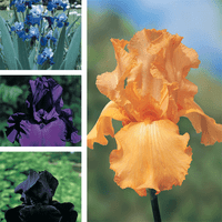 iris collection deal