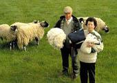 Kenneth & Kathleen with some of their sheep
