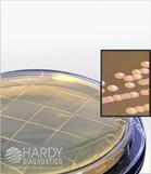 HardyVal™ P93 Malt Extract Agar