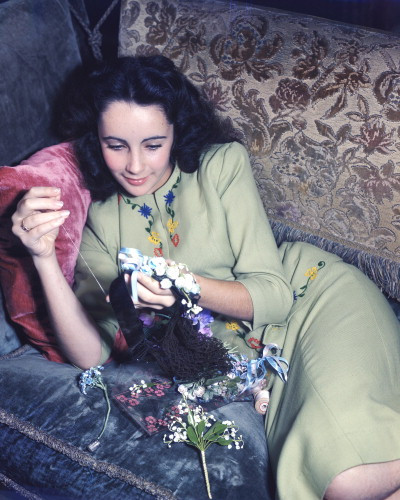 Picture of Elizabeth Taylor