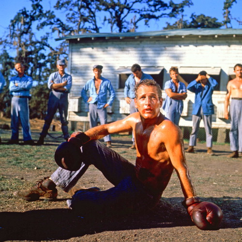 Picture of Paul Newman in Cool Hand Luke