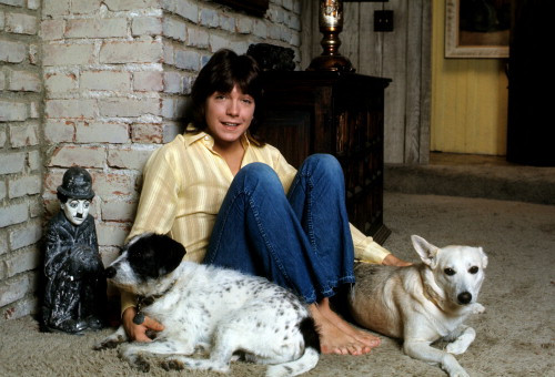 Picture of David Cassidy