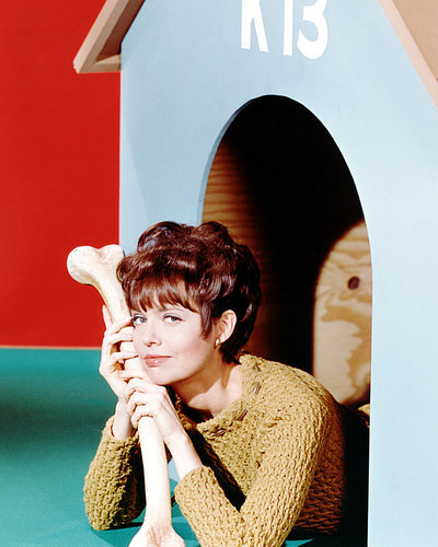 Picture of Barbara Feldon