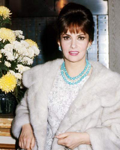 Picture of Gina Lollobrigida