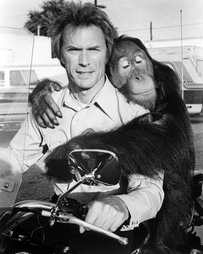 Picture of Clint Eastwood in Every Which Way But Loose