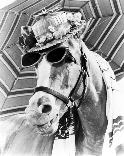 Picture of Mr. Ed