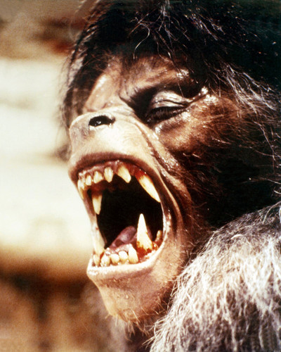 Picture of David Naughton in An American Werewolf in London