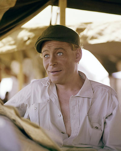 Picture of Peter O'Toole