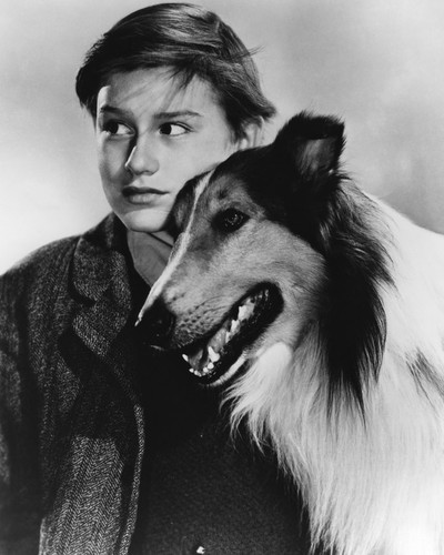 Picture of Roddy McDowall in Lassie Come Home