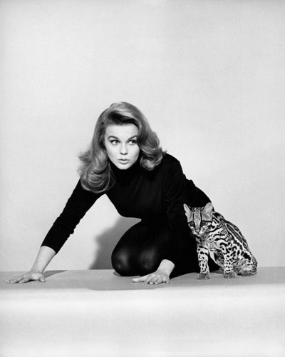 Picture of Ann-Margret in Kitten with a Whip