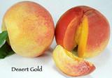Peach Desert Gold - 15 Gal