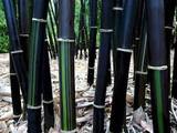 "Bamboo Black - 24"" Box"